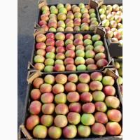 Белорусские яблоки по всей Беларуси и РФ