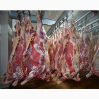 Реализуем мясо говядины оптом