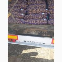 Продам продовольственный картофель, лук репчатый, морковь