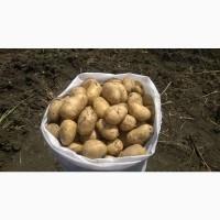 Куплю картофель Сортов Гала Бриз Королева