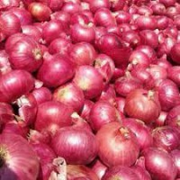 We sell Best Quality Organic Exporter Onion lt; +4536992142