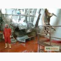 Услуги по убою коров и бычков