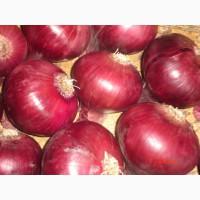 Свежего красного большого лука с хорошим качеством для продажи +13525096148, Донец