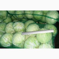 Продам оптом капусту сорт Лексикон