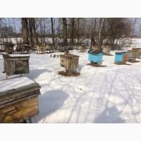 Продам пчелосемьи с улья и и без