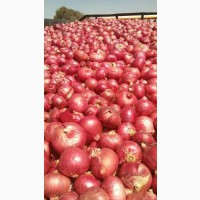 Sell Quality Exporter Of Onion lt; +4536992142
