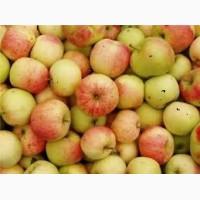 Куплю яблоко для промпереработки
