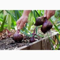 Selling Beet Root Powder Grade A lt; +4536992142