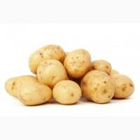 Продам мелкий молодой картофель оптом