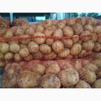 Картофель: королева анна, бриз, джувел, кроне