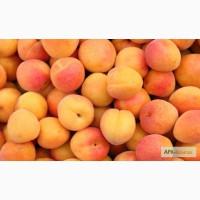 Продам абрикосы из Испании