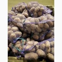 Реализуем картофель оптом