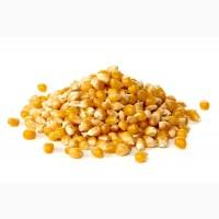 Кукуруза, горох, пшеница, рож, овес, ячмень, шрот, жмых с доставкой из России. Опт