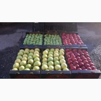 Купим яблоко калибр 70