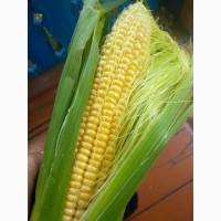 Продам сладкую кукурузу в початках