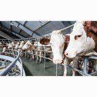Ремонт и обслуживание молочно-товарных ферм