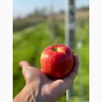 Продам яблоко сбор 2020 г.Цена договорная. Мелкий опт