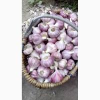 Продам чеснок урожай 2019 года
