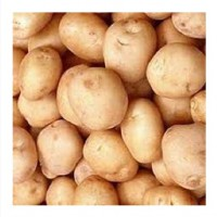 Buy potatoes in bulk with delivery lt; +45 36 99 01 82