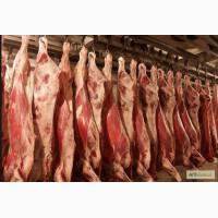 Продам мясо говядины живым весом