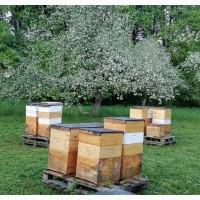 Пчелы и пчеломатки