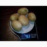 Купим картофель урожай 2021 г