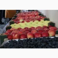 Продам яблоко Молдавское