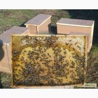 Продам пчелопакеты - кариника и среднерусская