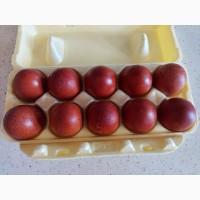 Маран яйцо инкубационное