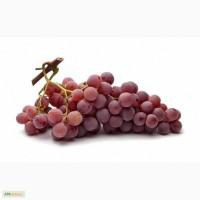 Продам виноград Red glob