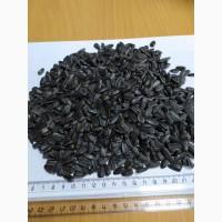 Семена подсолнечника калиброванные 38-40