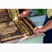 Пять пчелиных семей с ульями по выгодной цене