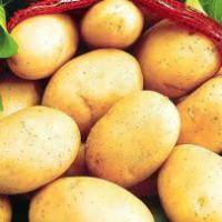 Продам картофель продовольственный