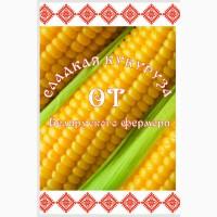 Сладкая кукуруза в початках от производителя