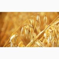 Продам зерно (пшеница, овес) урожай 2021 г
