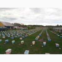 Продам пчелопакеты, пчеломатки