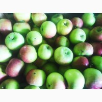 Яблоки сорта Имант и Белорусское сладкое