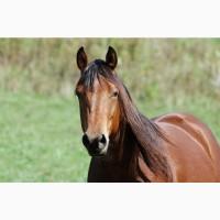 Услуги по транспортировке КРС, лошадей, жеребят