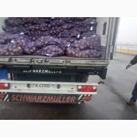 Картофель с документами на экспорт на Украину Молдову Сербию Турцию