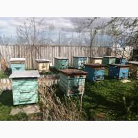 Пчелиные семьи, ульи