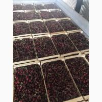 Продам черешню с садов Украины