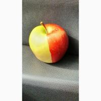 Яблоки от производителя, сорта лигол, алеся, хани - крисп, глостер