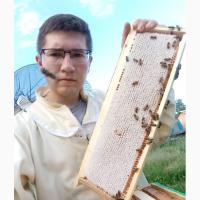 Мёд лесной и клеверный со своей пасеки