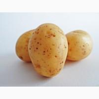 Мелкий картофель оптом
