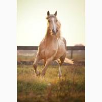 Куплю коней