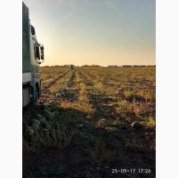 Арбуз урожай 2019 сочный, сладкий, красный, с доставкой из России