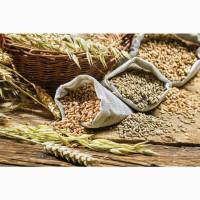 Закупаем зерно фуражное и продовольственное