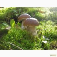Продам белые грибы