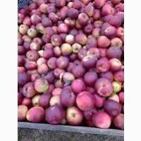 Продам яблоки Заславское, Белорусское сладкое, Память Сюбаровой-мелкий опт