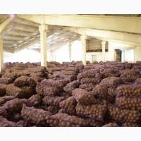 Картофель оптом от производителя со склада